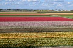 Nederländska Keukenhof arkivfoto