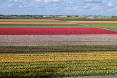 Nederland Keukenhof Stock Foto