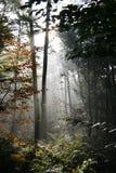 Nederlands bos in de herfst Royalty-vrije Stock Foto
