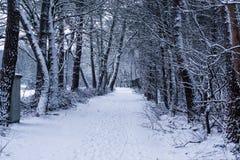 Nederlands de winter boslandschap, Bosdieweg en bomen in witte sneeuw, sneeuwweer, Europees landschapslandschap wordt behandeld v stock foto's