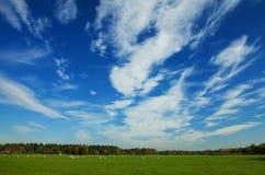 Nederlands de zomerlandschap Stock Foto's