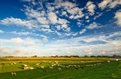 Nederlands landbouwgrondlandschap stock foto's