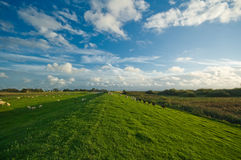 Nederlands landbouwgrondlandschap stock foto