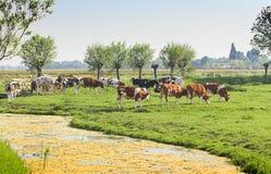 Nederlands landlandschap met koeien en schapen royalty-vrije stock afbeelding