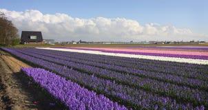 Nederlands landschap Stock Afbeeldingen
