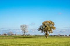 Nederlands landschap met weide en bomen stock foto