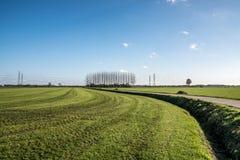 Nederlands landschap met weideans bomen stock foto