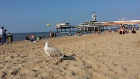 Nederlands strand Stock Afbeelding