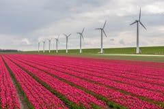 Nederlands tulpengebied met een lange rij van windturbines Stock Afbeeldingen