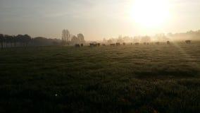 Nederlands zonsopganglandschap Stock Afbeelding