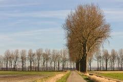 Nederlandse countryroad in de lente stock afbeelding