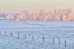 Nederlandse de winterscène Royalty-vrije Stock Fotografie