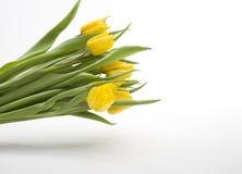 Nederlandse gele tulpen Stock Foto