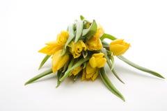 Nederlandse gele tulpen Royalty-vrije Stock Foto