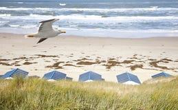 Nederlandse kleine huizen op strand met zeemeeuw Royalty-vrije Stock Fotografie