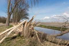 Nederlandse landbouwgrond met geblazen onderaan boom na zwaar de lenteonweer Royalty-vrije Stock Afbeeldingen