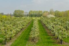 Nederlandse Landschappen - Heinkenszand - Zeeland Royalty-vrije Stock Foto