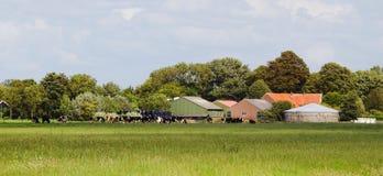 Nederlandse melkveehouderij met koeien Royalty-vrije Stock Fotografie