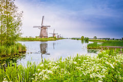 Nederlandse molens in Kinderdijk, Nederland Stock Fotografie