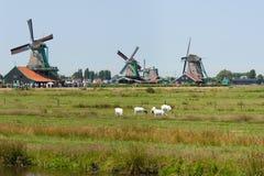 Nederlandse molens in Zaanse Schans Stock Foto