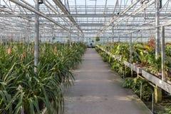 Nederlandse serre met een orchideekinderdagverblijf Stock Foto