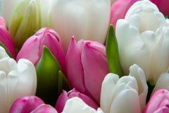 Nederlandse tulpen Stock Foto's