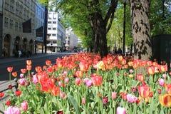 Nederlandse tulpen in het noorden Royalty-vrije Stock Foto's