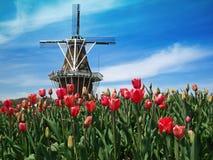 Nederlandse windmolen en vertoning van tulpen Royalty-vrije Stock Foto's