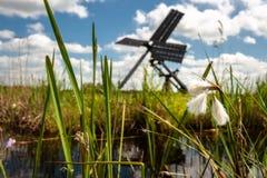 Nederlandse windmolen in het landschap van de Nederlandse polder met moeras p Stock Fotografie
