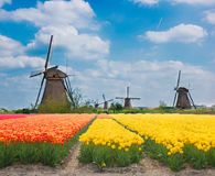 Nederlandse windmolens over tulpen Stock Fotografie