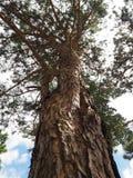 Nedersta himmel för träd Royaltyfri Foto