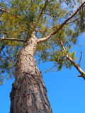 Nedersta himmel för träd Royaltyfria Foton