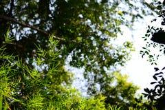 Nedersta sikt av bambusidor på den tropiska skogen royaltyfria bilder