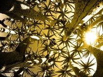 Nedersta sikt för darrningträd fotografering för bildbyråer