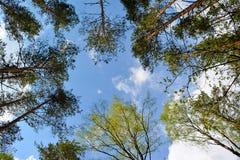 Nedersta sikt till träd på bakgrund för blå himmel royaltyfri fotografi
