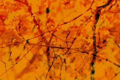 Nedgång Autumn Abstract Background Filialer sidor Rött apelsin y Arkivbilder