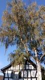 Nedgång Autumn Herbst Baum Birke arkivfoton