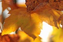 Nedgång färgade sidor på trädet Royaltyfri Fotografi