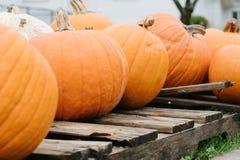 nedgång för palett halloween för orange pumpor trä Arkivbild