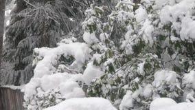 Nedgång för tung snö på buskar och träd i den Washington gården i vinter stock video