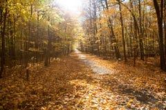 Nedgång Forest Park i Kanada royaltyfri fotografi