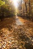 Nedgång Forest Park i Kanada royaltyfri foto