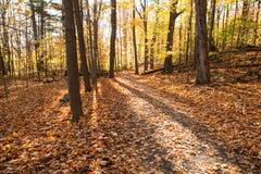 Nedgång Forest Park i Kanada arkivbilder