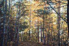 Nedgång i North Carolina på sjön James State Park royaltyfri fotografi
