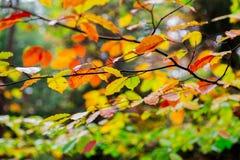 Nedgång i skogen Arkivfoto