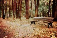 Nedgång i skogen Royaltyfria Bilder