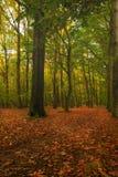 Nedgång i skogen Arkivbild