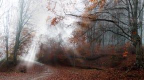 Nedgång i skogen Fotografering för Bildbyråer
