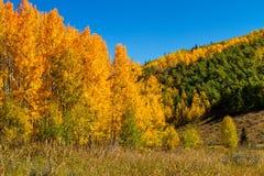 Nedgång i Steamboat Springs Colorado arkivfoton