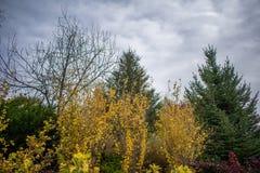 Nedgång i trädgården med den falska apelsinen och evergreen arkivfoton